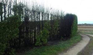 Požar čempresa na mjesnom groblju u Vratišincu